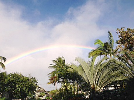 rainbow and Hawaiian palms
