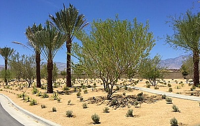 Del Webb Rancho Mirage desert entry landscape