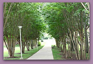 trees at Leisure World Md