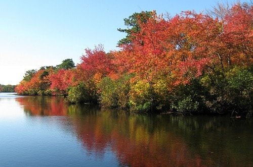 Connetquot River on Long Island, NY in Fall
