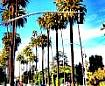 Beverly Hills Calif.