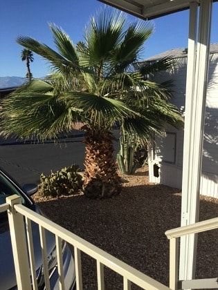 View from deck in Palm Springs area in February.