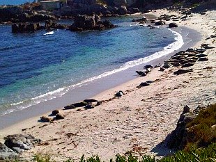 Monterey Bay Sea Otters sunning