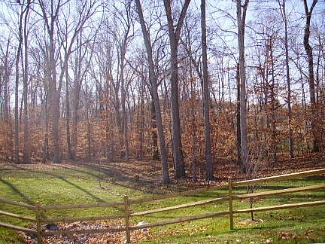 woodsy landscape at Leisure World Md